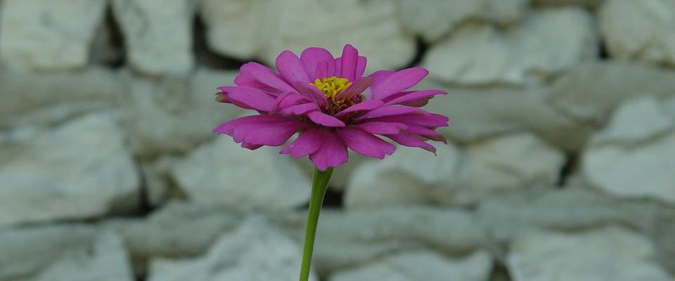 Fleur - Fotolia