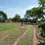 Le jardin avec des produits locaux