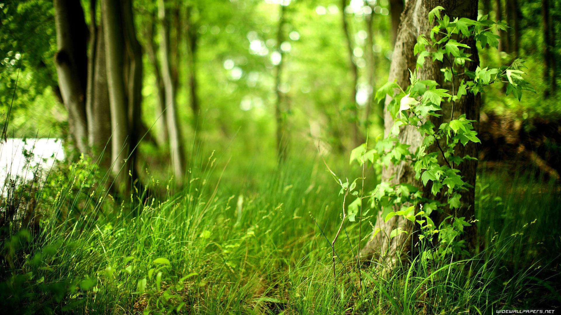 fond-ecran-nature-paysages-forets-199